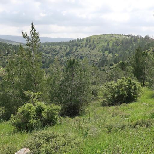 panorama of hills in Judea 1