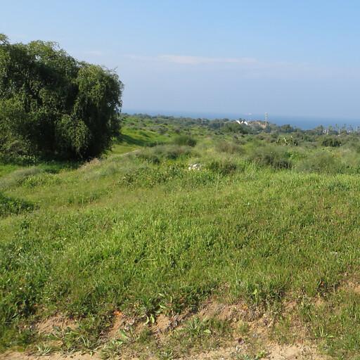 panorama of a coastal plain in Philistia