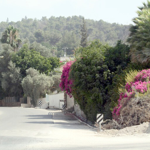 road in the region between Eshtaol and Zorah