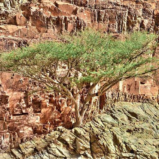 tree along Wadi el Sheikh