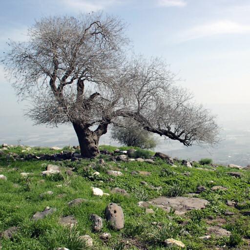 ruins at Sheikh Mazghith