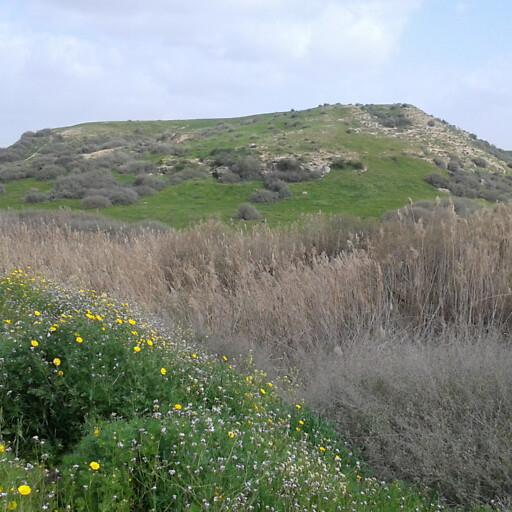 panorama of Tell esh Sharia