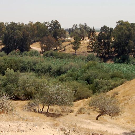 panorama of vegetation along Nahal Gerar