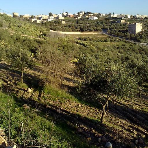 natural area in Hauran