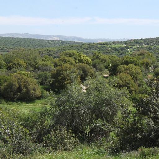 panorama of hills in the Shephelah