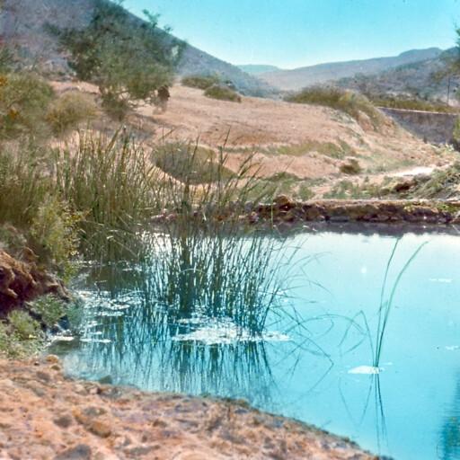 pool at Ain el Qudeirat