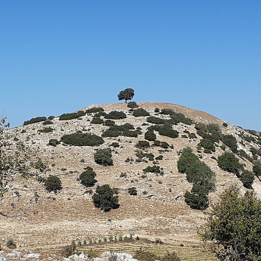 panorama of Tel Alil West