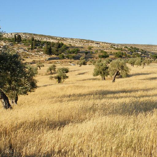 field at Yanun