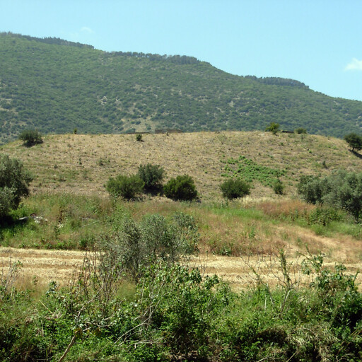 panorama of Tell Amr