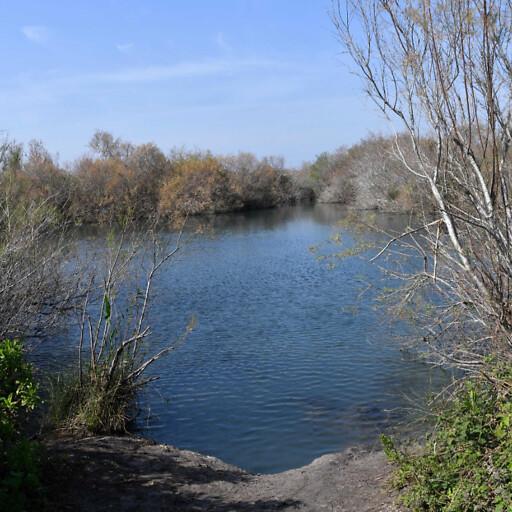 closeup of the Kebara Swamps