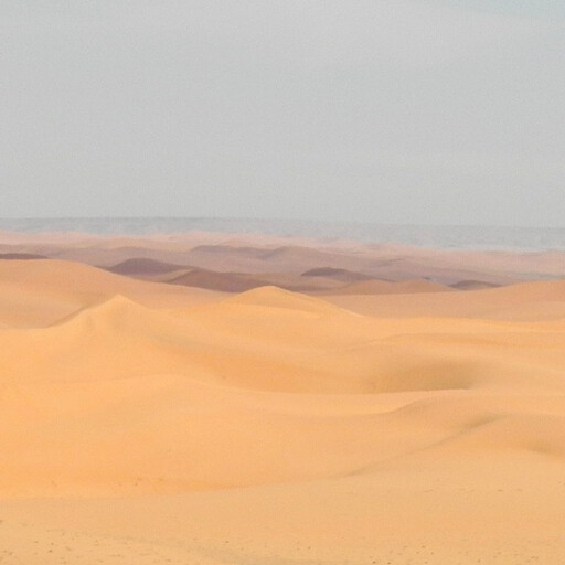 desert in the Arabian Peninsula