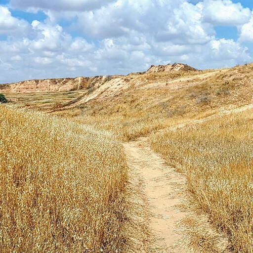 panorama in the region between Gerar and Beersheba