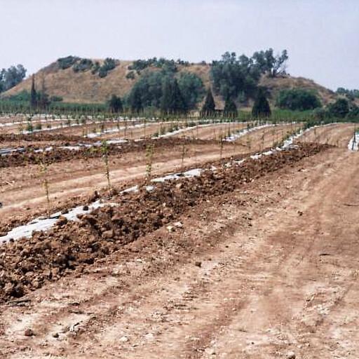 panorama of Tel Erani