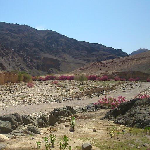 panorama of Wadi Ghuwayr