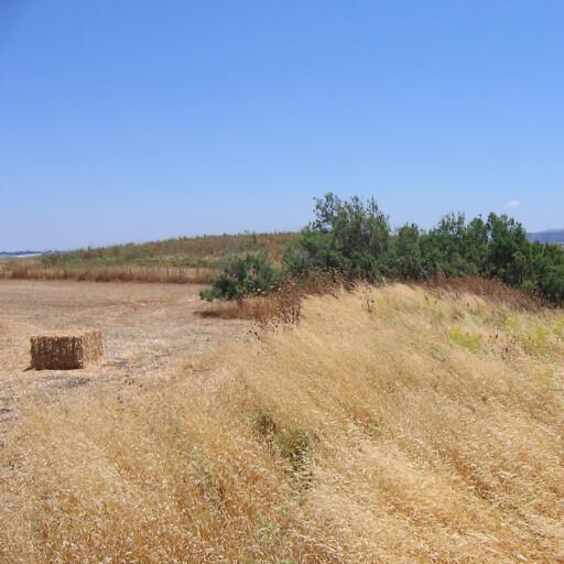 panorama of Tell Thorah