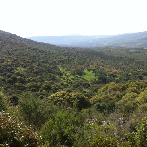 panorama of hills in Galilee